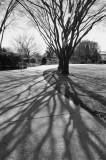 Winter Tree Shadows.jpg