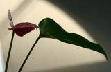 Flower Silhouette.jpg