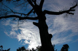 Winter Sky #2