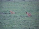 Mother and cubs at dusk, so somewhat blurred-3358