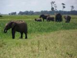 Kenya09-3851