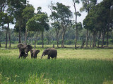 Kenya09-3858
