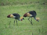 Kenya09-3877