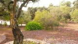 Landscape of the Walk to Fatima Hill P1020025.jpg