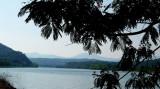 Mimosa Shadows Melton Hill Lake