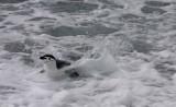 CHPE-surf.jpg