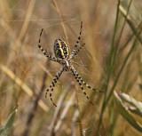 orb-weaving-spider-I.jpg