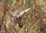 orb-weaving-spider-II.jpg