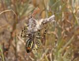 orb-weaving-spider-III.jpg