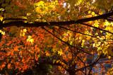 Fall Colors in Garrett Park, MD - November 2007