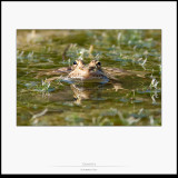 Rèptils i amfibis