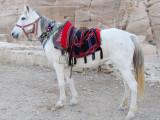 Many horses, donkeys, and camels await riders.
