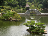 Tranquil pond scene