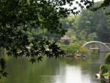 Glimpse of the pond through the trees