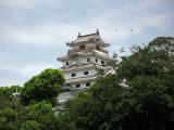 Ospreys flying above the castle