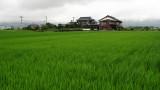 Rice paddies near Yoshinogari station