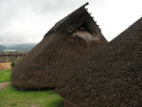 Thatched roofs of the restored huts