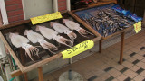 Squid and fish set out to dry