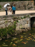 Feeding the carp outside the castle grounds