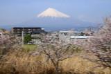 Spring cherry blossoms blurring past Fuji