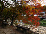 Benches beneath the Japanese maples