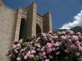 Flowers within Kruja castle
