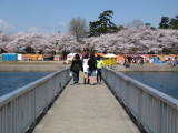 Crossing to the hanami festivity