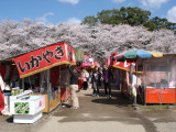 Hanami yatai on the north bank