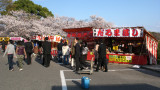 Browsing the hanami yatai, Tsurumai-kōen