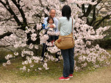 Posing with grandpa amidst the sakura