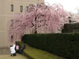 Snapping pics beneath a weeping cherry tree