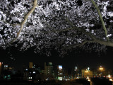 City lights and illuminated blossoms
