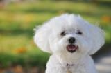 Dog-Ginger