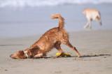 Dog we met at Huntington dog Beach.