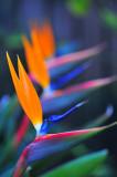 Flower/Bird of Paradise