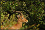 African wildlife: The Kruger National Park