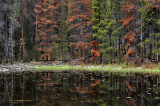 Deep woods reflection