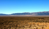 Nevada sage