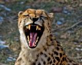 Yawn IMGP2033.jpg