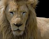 White Lion IMGP1446.jpg