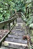 Start of the 100 steps to Lake Rotoiti