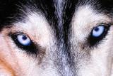 those eyes 3.jpg