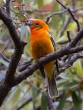 ::Arizona Birds::