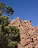 Pine Tree and Outcropping