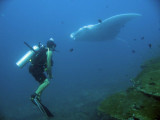 Diving - Similan Islands
