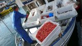 Fresh Shrimps and Fish for Sale