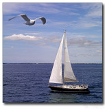 $140 - The Essence of Sailing