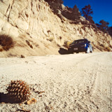 Large Pine Cone on the road, Sierra Nevada, CA, USA