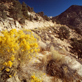 Sierra Nevada Mountains, CA, USA