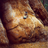 My Boot on the Giant Sequoia Tree, California, USA